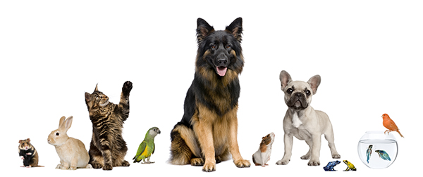 Pet Insurance Could Save You Thousands of Dollars